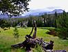 20_meadow.jpg