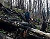 35_woods_burned_1024x792_.jpg