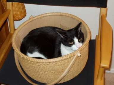 Kitty%20basket2.jpg