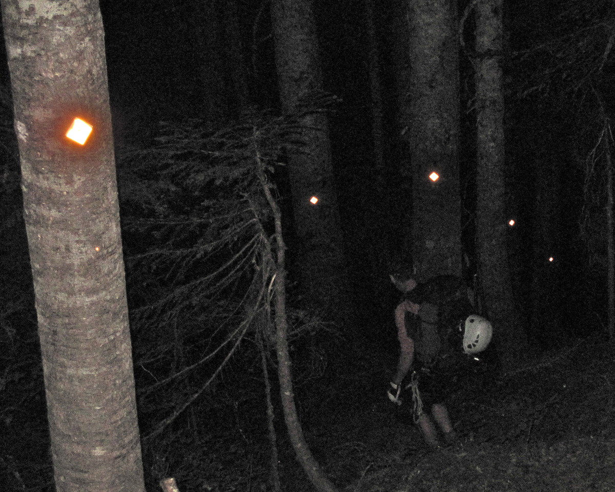 MArkers_in_the_dark_forest.JPG