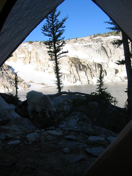 559goat_and_view_from_tent.JPG