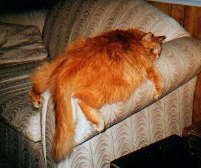 427250-cat.jpg.8a5cf71d6036d29887233a1ba37775a4.jpg