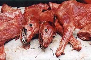 481488-eat_dog_5.jpg.a3e5375e0472ed9a562e72e856cc131a.jpg
