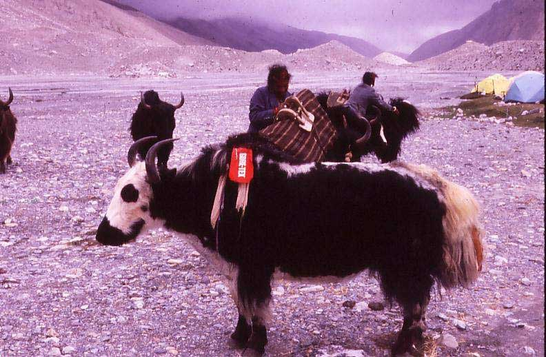 1-Leaving-base-camp.jpg