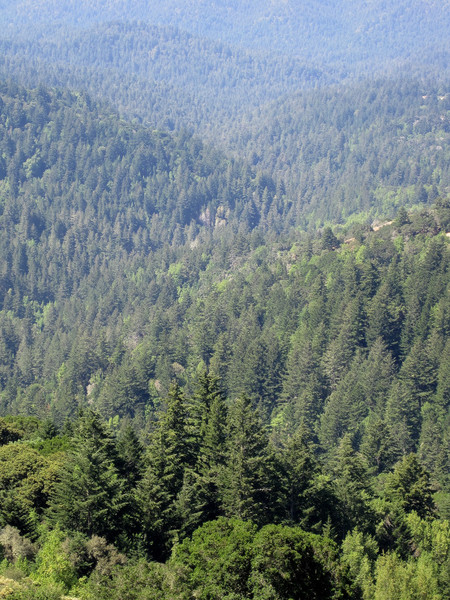 Looking down towards Pescadero Creek